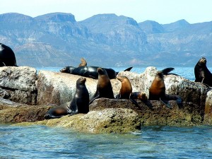Lobos_Marinos_BCS_MExico_Rocks_Sea_Lions