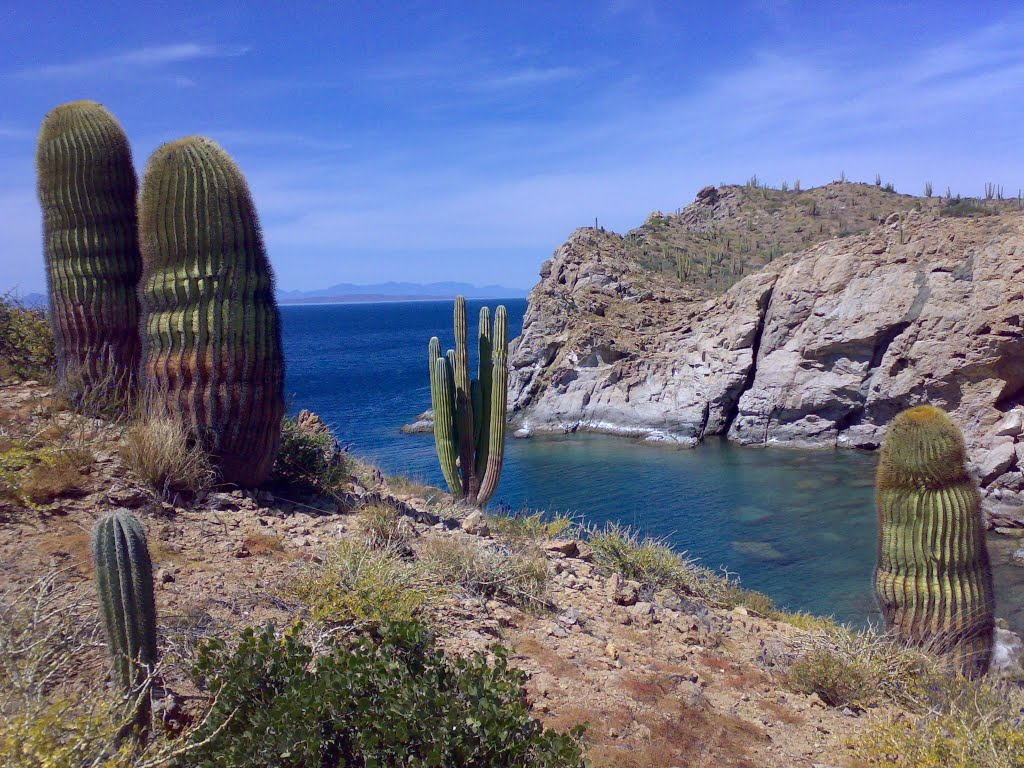 isla_catalina_mar_verde